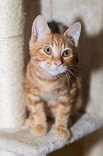 Rescued kitten-Hunter Valley Cat Haven Cessnock Cessnock Area Preview