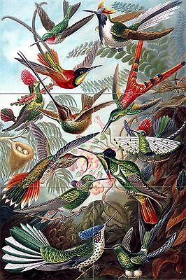 12 x 18 Birds Tile Mural Kitchen Bathroom Wall Backsplash Ceramic