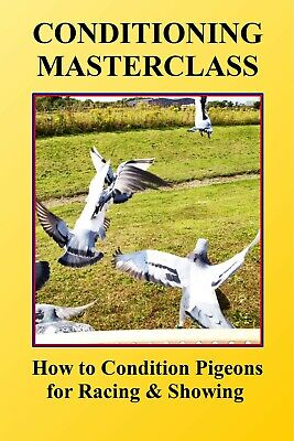 RACING PIGEON DVD 'Conditioning Masterclass: How to condition pigeons...'