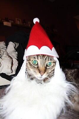 Santa hat and beard for a cat or small dog. Only worn once.EUC Christmas - Cat Costume For A Dog