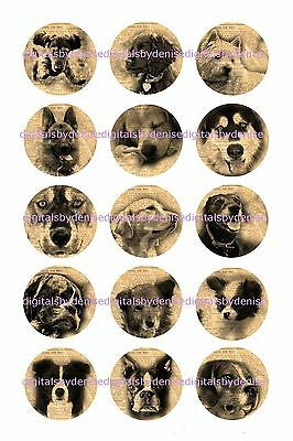 "DOG  ON NEWSPAPER 15 BOTTLE CAP IMAGES  1"" CIRCLES *****FREE SHIPPING*****"