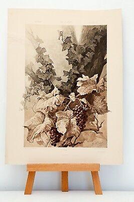 """Heliogravüre Plate 165 Weinstock 1886 """"Die Pflanze in Kunst und Gewerbe"""""""