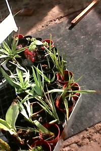 Assorted  plants Davoren Park Playford Area Preview