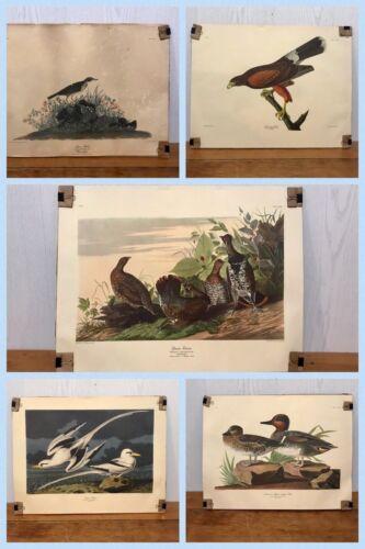 6 BIRD Pictures School Classroom Art Teacher Audubon 16 X 21 VINTAGE 1950s 1960s