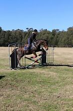 Thoroughbred mare reduced!!! Boolaroo Lake Macquarie Area Preview