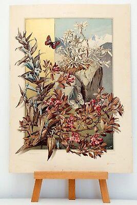 """Farb-Lithographie Plate 187 Edelweiß 1886 """"Die Pflanze in Kunst und Gewerbe"""""""