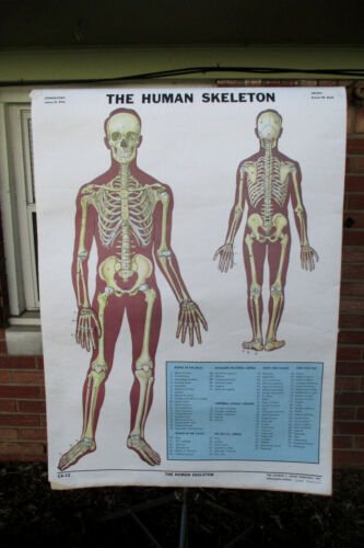 Vintage Health Biology Anatomy Science Health Chart Wall School Home Poster