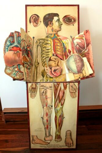 1886 Whites Physiological Chromolithograph Folding Manikin Female & Male Anatomy