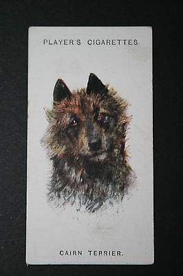 Cairn Terrier    Original Vintage Dog Portrait Card # VGC