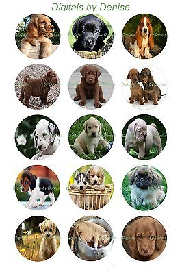 "CUTE PUPPY DOGS bottle cap images 15 precut 1"" circles  *****FREE SHIPPING*****"