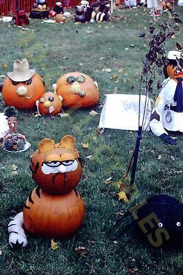 Garfield Halloween Photos (Original slide photo 1986 Halloween Jack O' Lanterns Garfield)