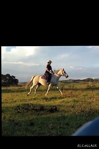 Stock horse x Kyogle Kyogle Area Preview