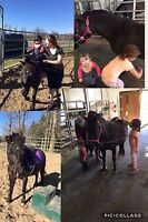 Cours de bébé-poney