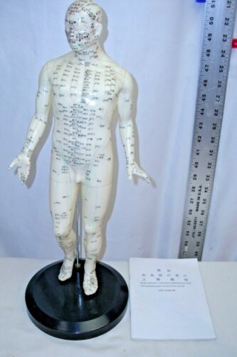 """ASIAN ACUPUNCTURE 20"""" MALE MODEL WITH MERIDIAN MANUAL UNUSED"""