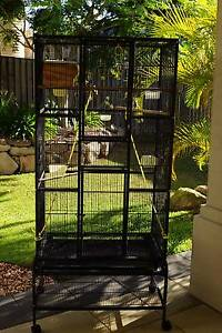 Large Bird Cage Reedy Creek Gold Coast South Preview
