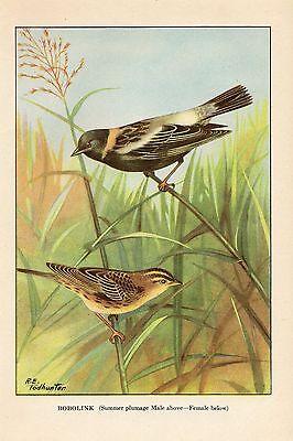 1926 Vintage TODHUNTER BIRDS