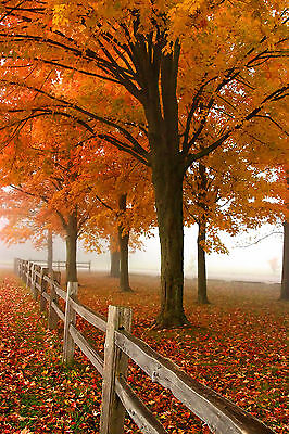"Wall Art Picture ""Autumn Fog Color Trees Farm "" Archival Photograph Decor (AFP)"