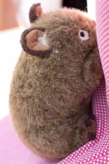Adorable wombat
