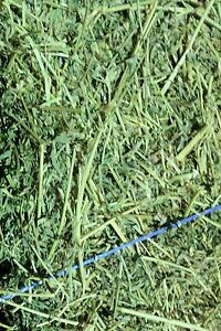 Lucerne Hay - Small Bales Mulgoa Penrith Area Preview