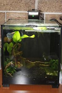 Aqua One Xpression 17L set up for sale Leichhardt Leichhardt Area Preview