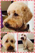 Experienced Dog Groomer Kewarra Beach Cairns City Preview