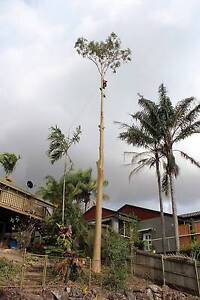 FREE MULCH - Gold Coast Tree Lopper/ Arborist Gaven Gold Coast City Preview