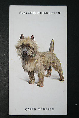 Cairn Terrier     Early 1930's Original Vintage Illustrated Card