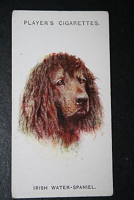 Irish Water Spaniel    1920's Vintage Dog Portrait Card # VGC