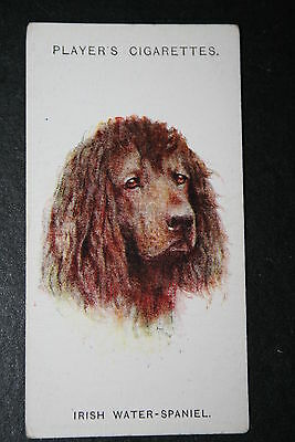 Irish Water Spaniel    1920's Vintage Dog Portrait Card  VGC