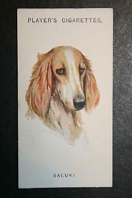 Saluki  1920's Vintage Dog Portrait Card  VGC