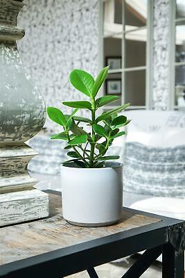 Ivyline Coastal Leon Stone Dove Grey Indoor Planter Flower Pot Contemporary