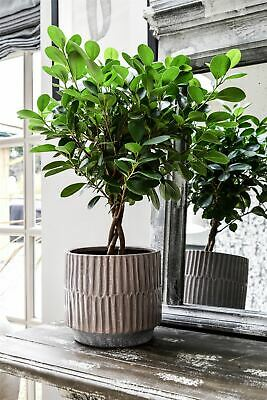 Ivyline Onno Planter Flower Plant Pot Embossed Design in Blush Mauve 17cm