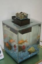 FISH TANK...FUVAL CHI 19 litre Aquarium with many extras Banora Point Tweed Heads Area Preview