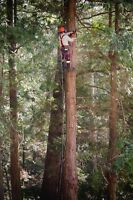 Blake Forrest Tree Care Inc ( Tree Removal Experts ) Call Today