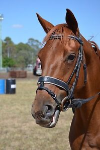 PRETTY CHESTNUT MARE Southbrook Toowoomba Surrounds Preview