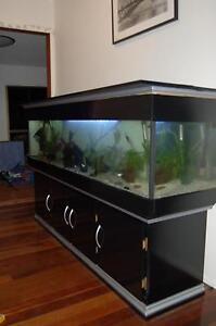 Entire fish tank set up for sale. Carina Heights Brisbane South East Preview