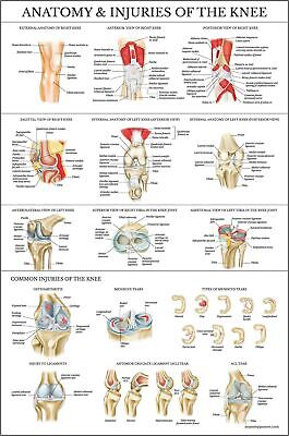 Laminated Anatomy And Injuries Of The Knee Poster - Knee Joint Anatomical Cha...