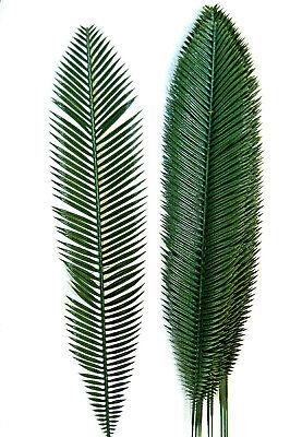 12 Strauß (12 St. 70 cm Palmwedel Kunstpalmen Künstliche Blätter Deko Floristik Strauß L55)