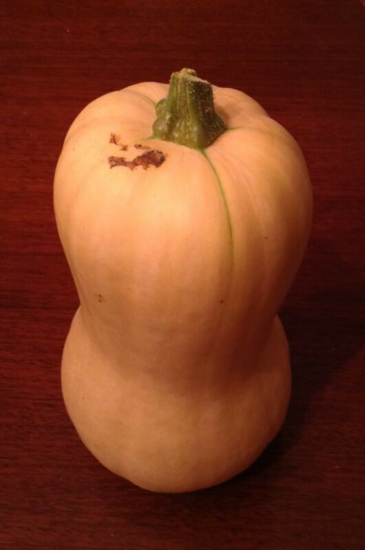 Giant Butternut Squash -- 25+ organic seeds. Easy to grow, will keep all winter!