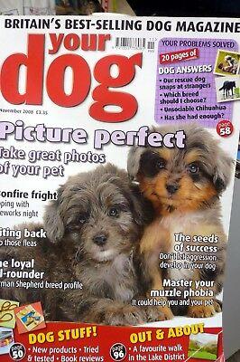 your dog magazine November 2008