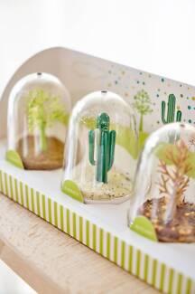 Creative Salt Shaker bottles