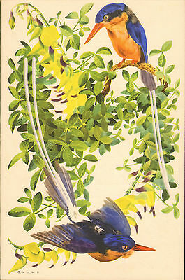 p & o - s.s. carthage  menu (  1955 ) dinner (  white tailed kingfisher  )
