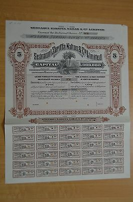 Egypt - Sednaoui Zarifaa Nahas&Co Ltd Certificates 5 Deferred shares Specimen