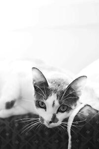 Little Paws Kitten Rescue Rocky