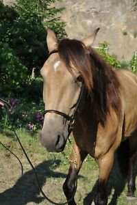Gorgeous Buckskin Dream Horse