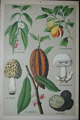 Müller - Praktische Pflanzenkunde - Regensburg 1900 - 24 farb. Tafeln ()