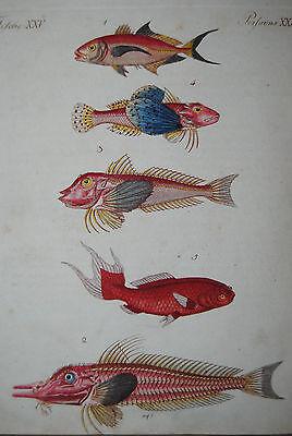 Bertuch - Bilderbuch für Kinder - Band 2 - Weimar 1795