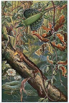 C4065 Drago volante - Stampa d'epoca - 1927 Vintage print