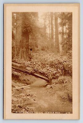 Vintage Postcard RPPC Sequoia Park Path CA Men Pillsbury Picture Co Unposted C6