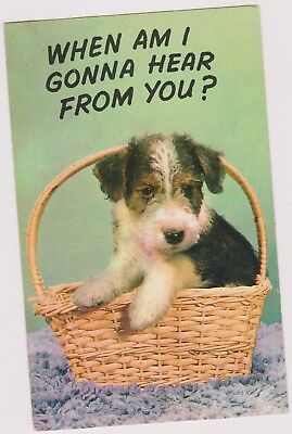 DOG IN BASKET POST CARD.